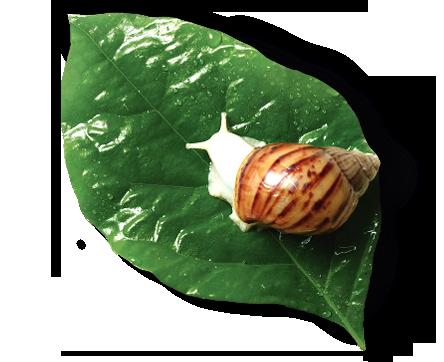 프랑스 달팽이 점액 여과물